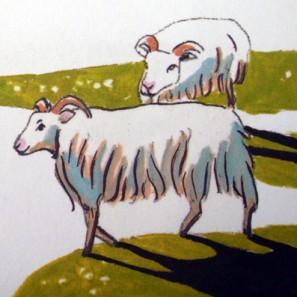 Retour d'Islande: moutons islandais