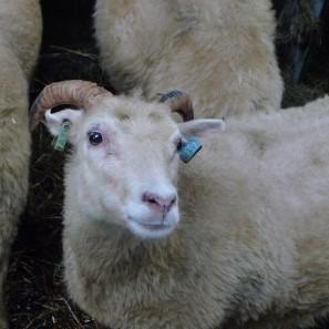 Tricot on Ice - Tricoteuse d'Islande - pull islandais lopi - voyage de tricot (9)