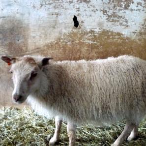 Vacances de tricot printanières en Islande (5)