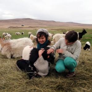 Vacances de tricot printanières en Islande (4)